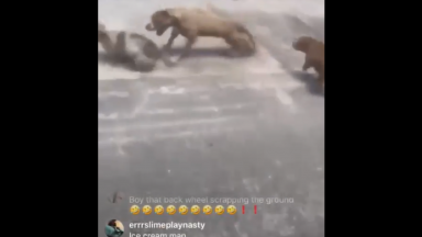 Dude Laughs On Live While His 2 Pitbulls Attack A Small Dog In The Street!