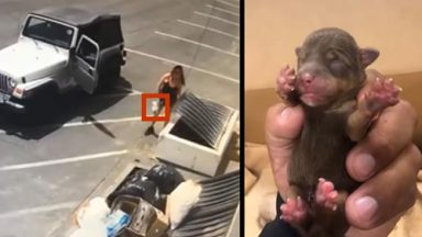 Video Catches Woman Tossing 7 Newborn Puppies Into Coachella Dumpster In 90 Degree Weather!