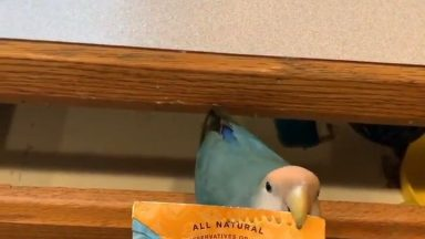 a_women_from_idaho_uses_a_small_parrot_to_open_the_tea_bag_