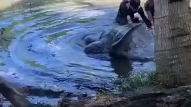 Indonesian bros helping a giant sea turtle return to the sea after being stuck in a swamp for 2 days